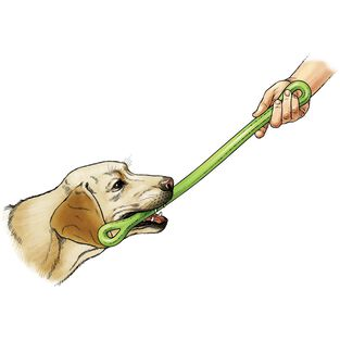 The Perfect Dog Toy LIMEGRN