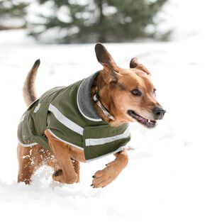 Grab Dog Jacket